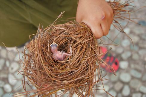 Bird Basket.jpg