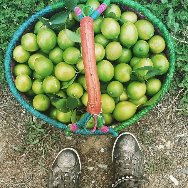 My lime picking footwear betrays my city roots