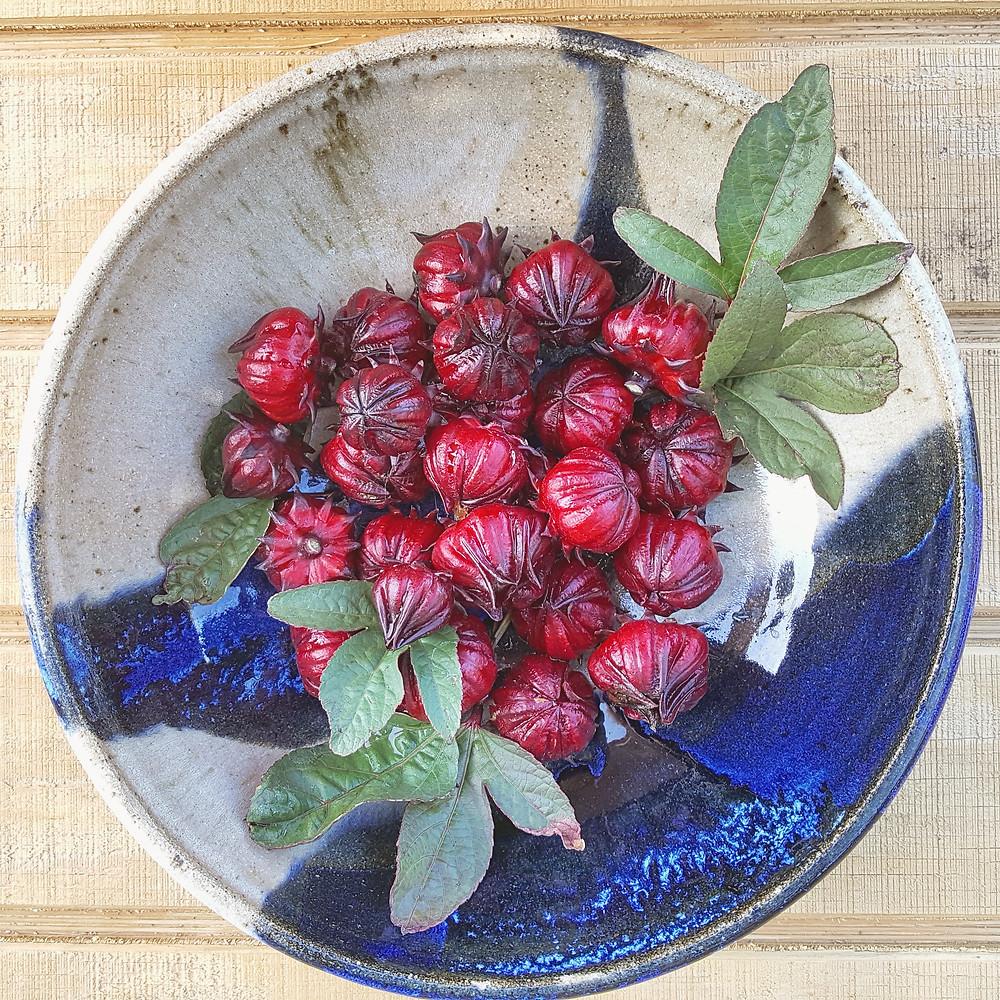 Thai Roselle, Edible Hibiscus