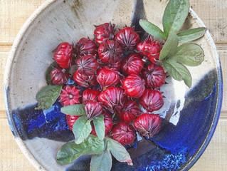 Preserving the Harvest: Hibiscus Liqueur