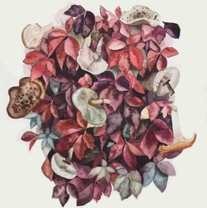 Leaves and mushrooms