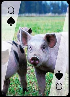 methow_queen_of_spades.png