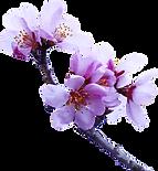 almond-tree-2063659_960_720_edited_edite