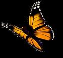shutterstock_364257044_Butterfly-4b.png