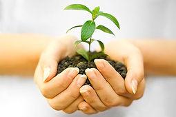 Depositphotos_4373442_seedling.jpg
