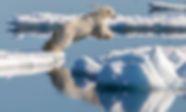 Jumping Ice Bear.jpg