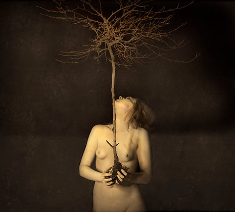 "Jack Spencer ""Dryad"""