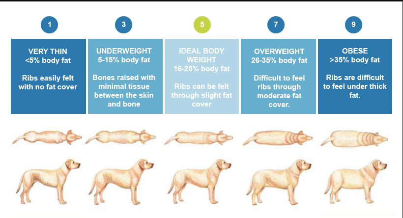Dog Body Condition.png