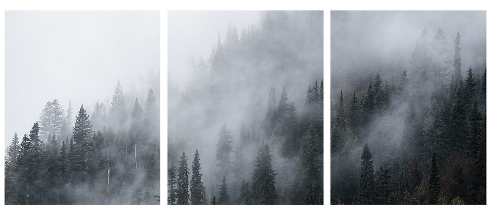 Moody Forest in the Fog (3-Piece Print)