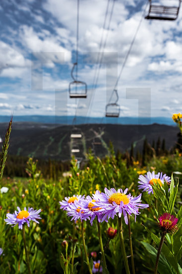 Summer Views atop the Chairlift