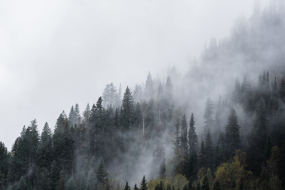 Moody Forest Trees