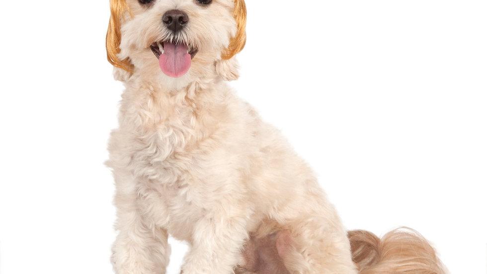 Political Billionaire Pet Wig