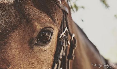 The Horse Safari Company.jpg