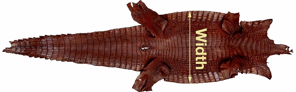 how to measure alligator skin