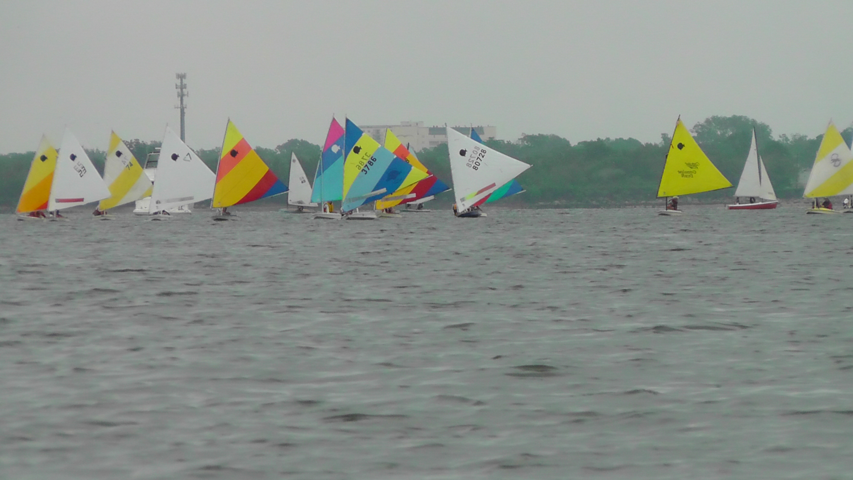 sunfish at the start
