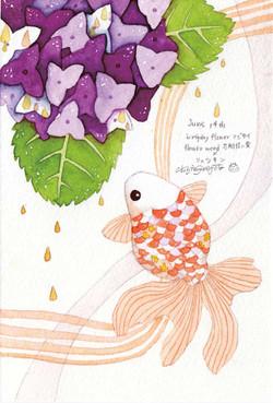0614_紫陽花_リュウキン