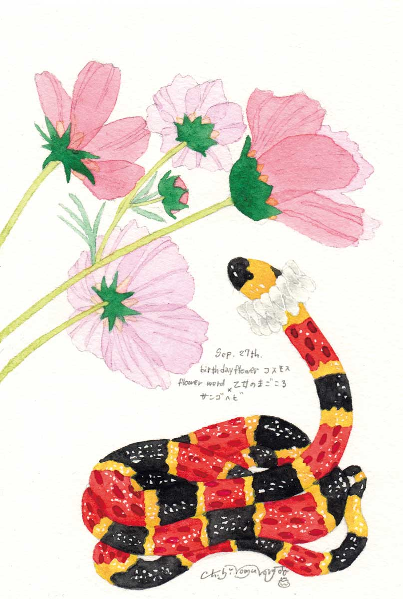 0927コスモス_サンゴヘビ