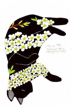 0323ユキヤナギ_黒猫