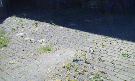 driveway cleaning- Before
