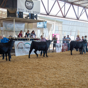 Fairgrounds day_2_4H_events-101.jpg