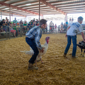 Fairgrounds day_2_4H_events-7.jpg