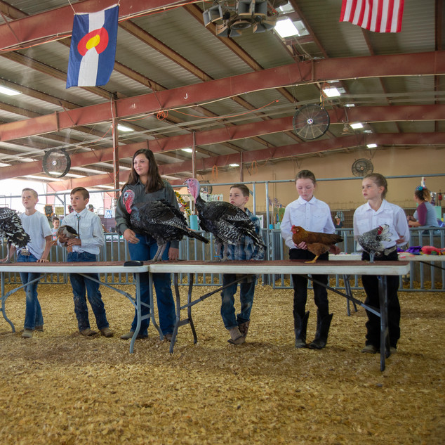 Fairgrounds day_2_4H_events-33.jpg