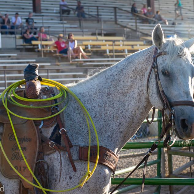 fairgrounds day 1 stadium-297.jpg