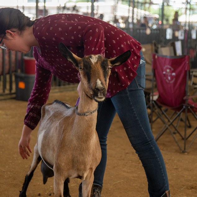 Fairgrounds day_2_4H_events-133.jpg