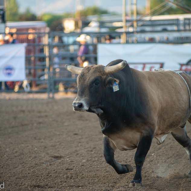 Fairgrounds day_2_rodeo-529.jpg