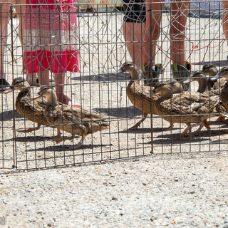 Fairgrounds day_2_4H_events-406.jpg