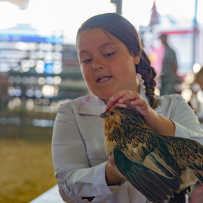 Fairgrounds day_2_4H_events-150.jpg