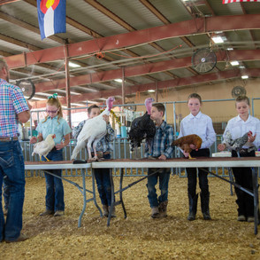 Fairgrounds day_2_4H_events-42.jpg