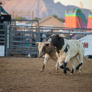 Fairgrounds day_2_rodeo-648.jpg