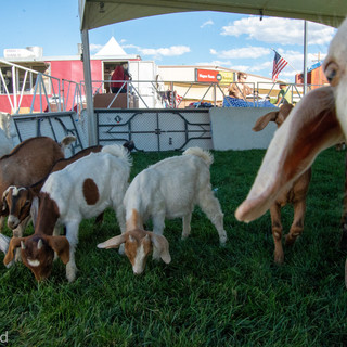 Fairgrounds day_3_others-23-3.jpg