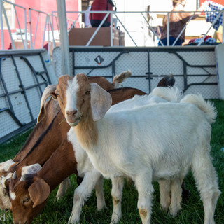 Fairgrounds day_3_others-20-3.jpg