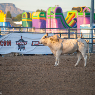 Fairgrounds day_2_rodeo-608.jpg