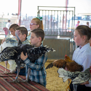 Fairgrounds day_2_4H_events-44.jpg