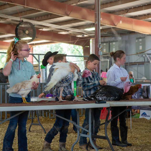 Fairgrounds day_2_4H_events-141.jpg