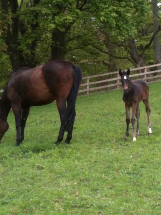 2013 filly foal