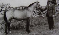 Clonkeehan Auratum