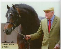 Llanarth Prince of Wales
