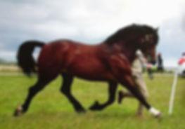 comet native pony festival.jpg