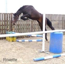 Hartpury Roxette