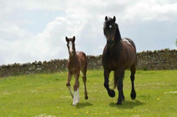 Arthur colt born May 2017