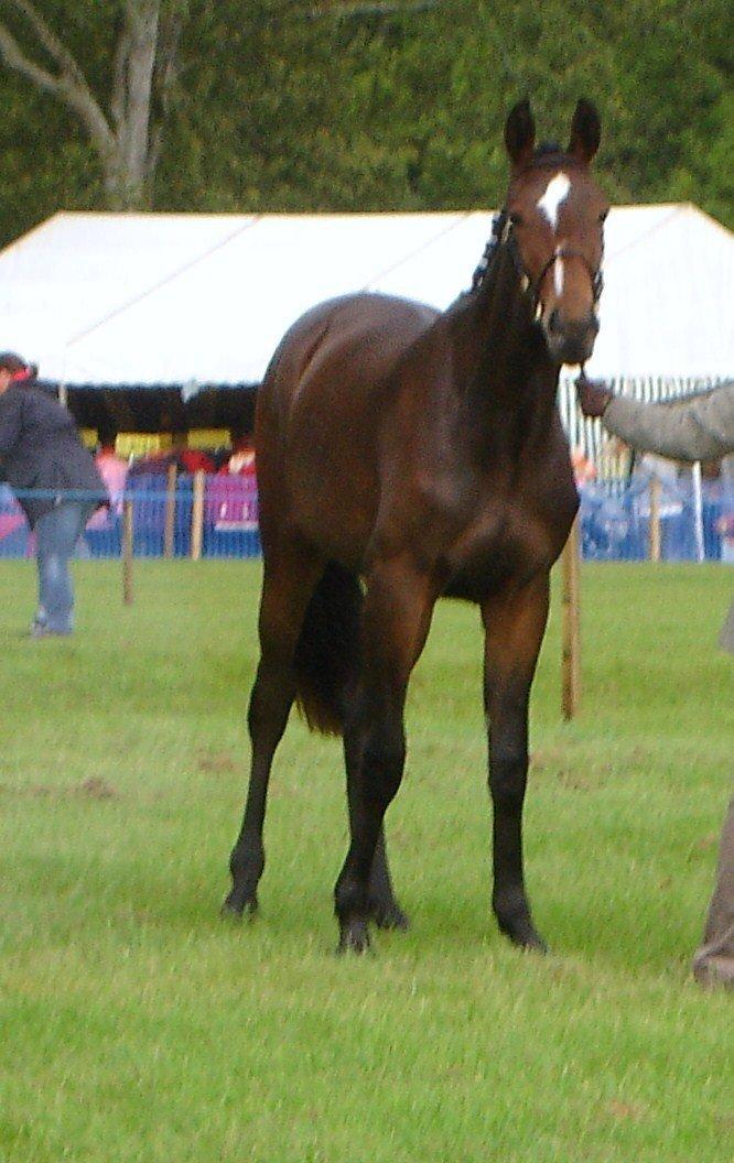 2009 foal