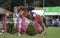 Hartpury Sky is the Limit