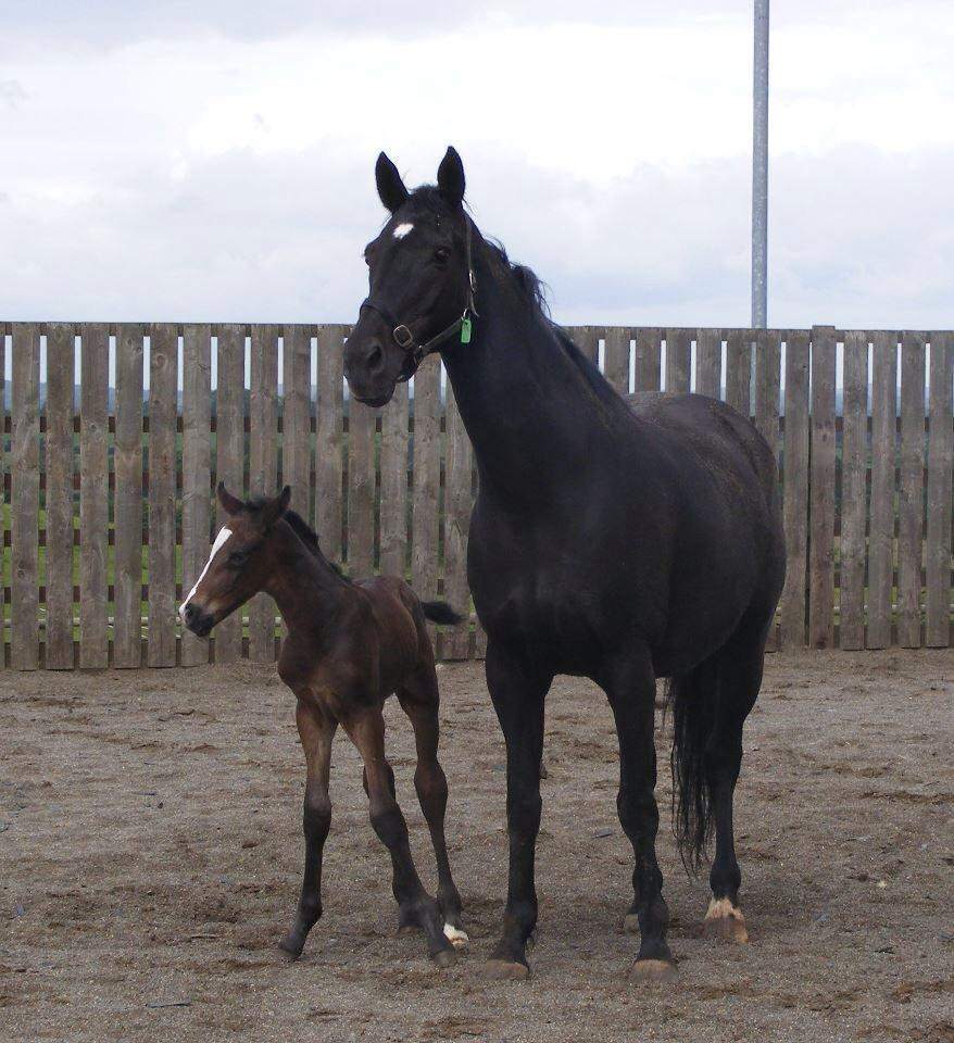 Colt by Take It 2 The Limit