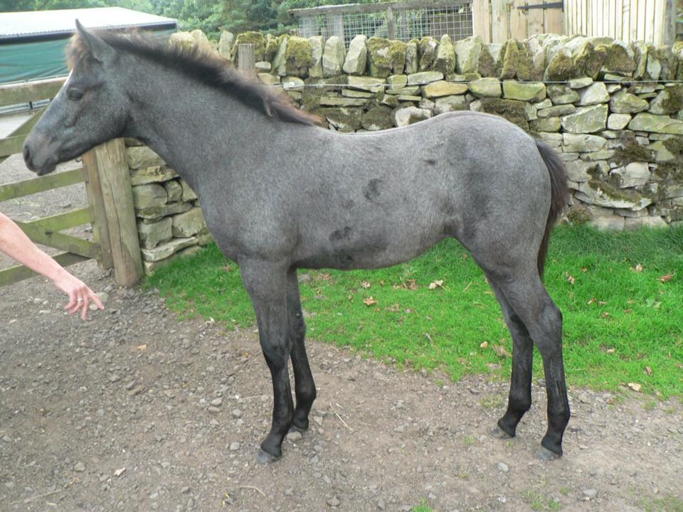 foal born 2013