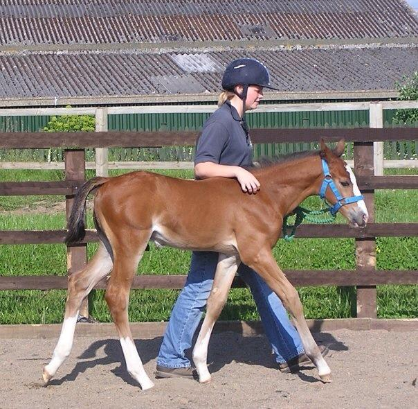 Hartpury Sky Is The Limit as a foal