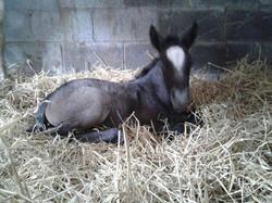 Filly foal
